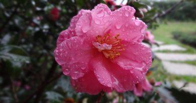 Tuintaken maart - Tuinkalender