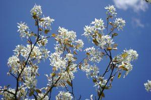 Boom Kleine Tuin : De perfecte boom voor de kleine tuin stadsetuinen