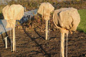 Planten beschermen tegen vorst - Zo bescherm je planten tegen vorst