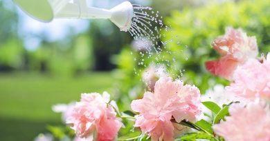 Hoeveel water moet ik mijn planten geven?