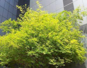 Hoe kan je inkijk in de tuin beperken - meer privacy in je tuin