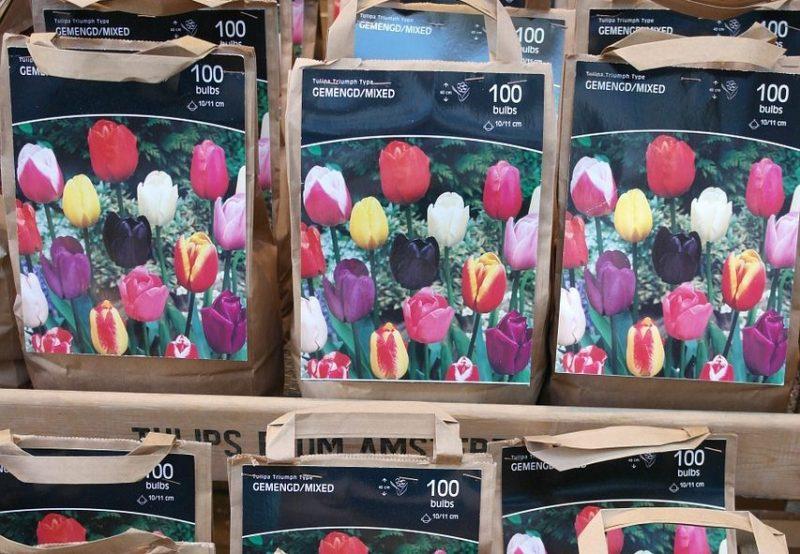 Tips voor Bloembollen planten