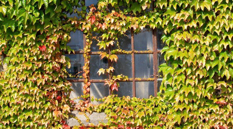 Beschadigen klimplanten de muur?