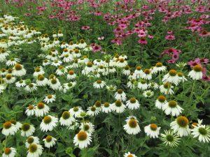 Wat is een vaste plant?