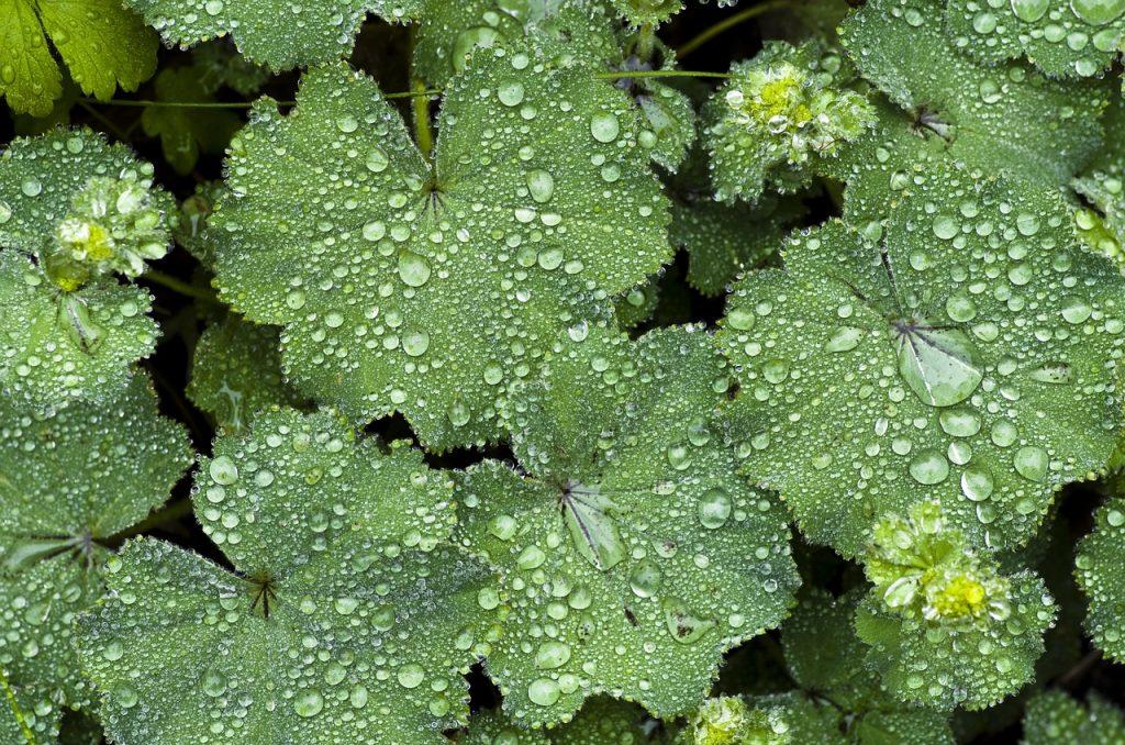 Onderhoudsarme planten - Planten met weinig onderhoud