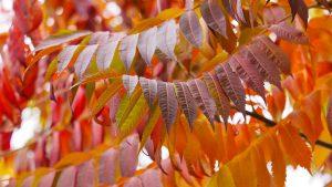 Herfstkleuren in de kleine tuin - mooie herfstverkleuring