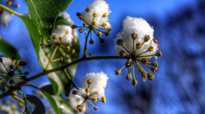 Wat kan je planten in de winter?