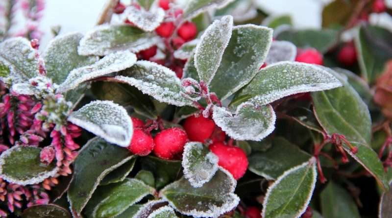 Moet je de tuin winterklaar maken?
