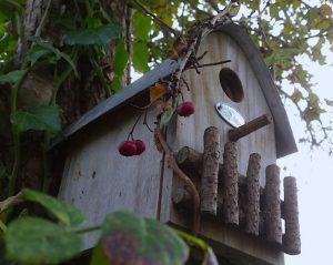 Nestkast - Het hele jaar meer vogels in de tuin