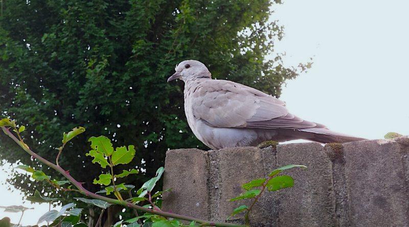 Het hele jaar meer vogels in de tuin