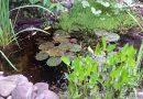 Vanaf wanneer kan je Vijverplanten planten?