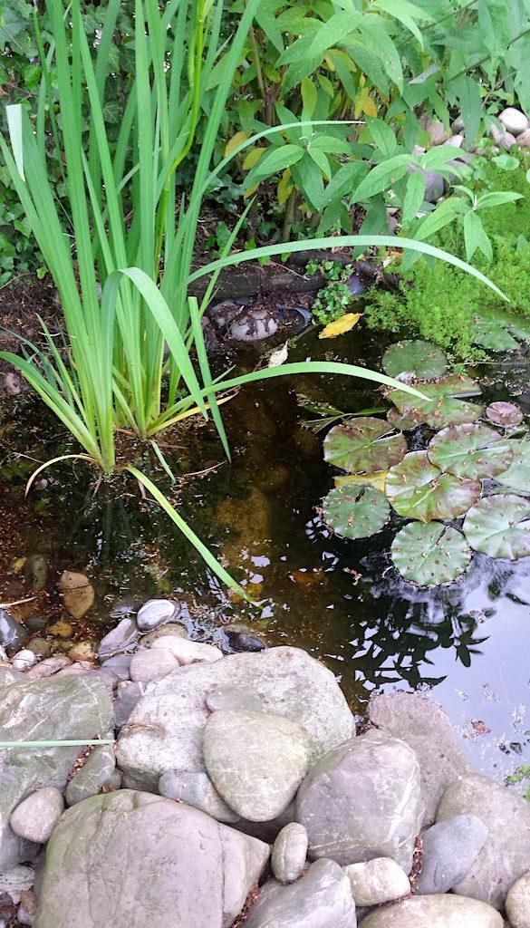 Vijverplanten planten in mei