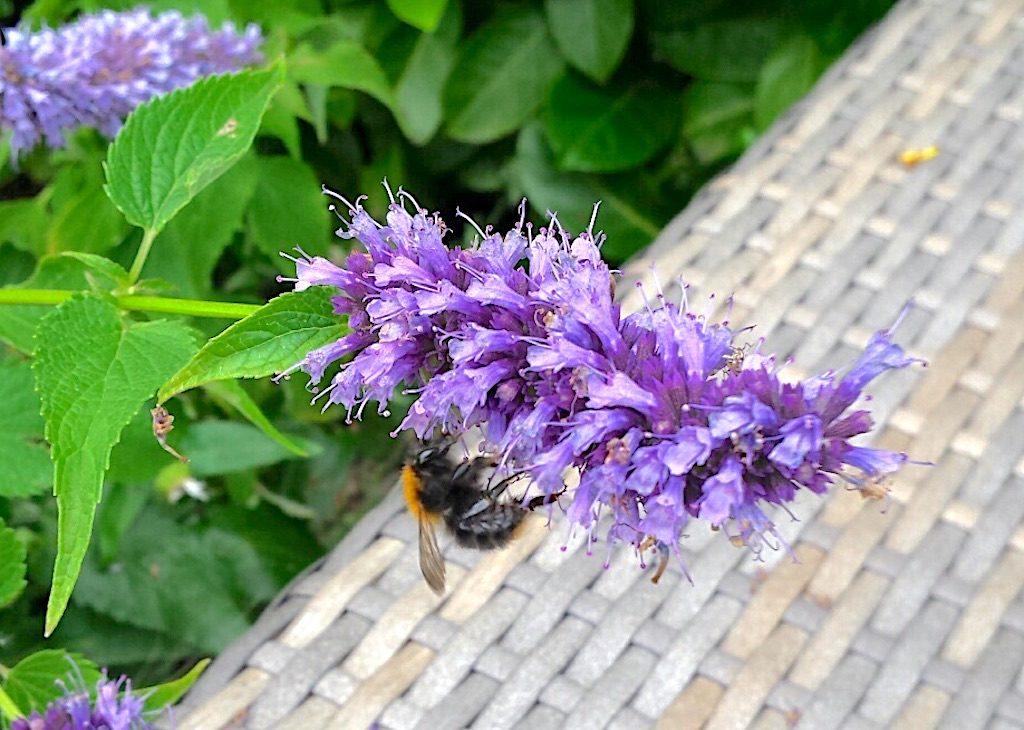Zo krijg je meer bijen in je tuin