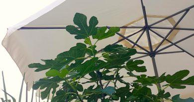 Zo komt je tuin de hitte door - Tuintips voor warme dagen