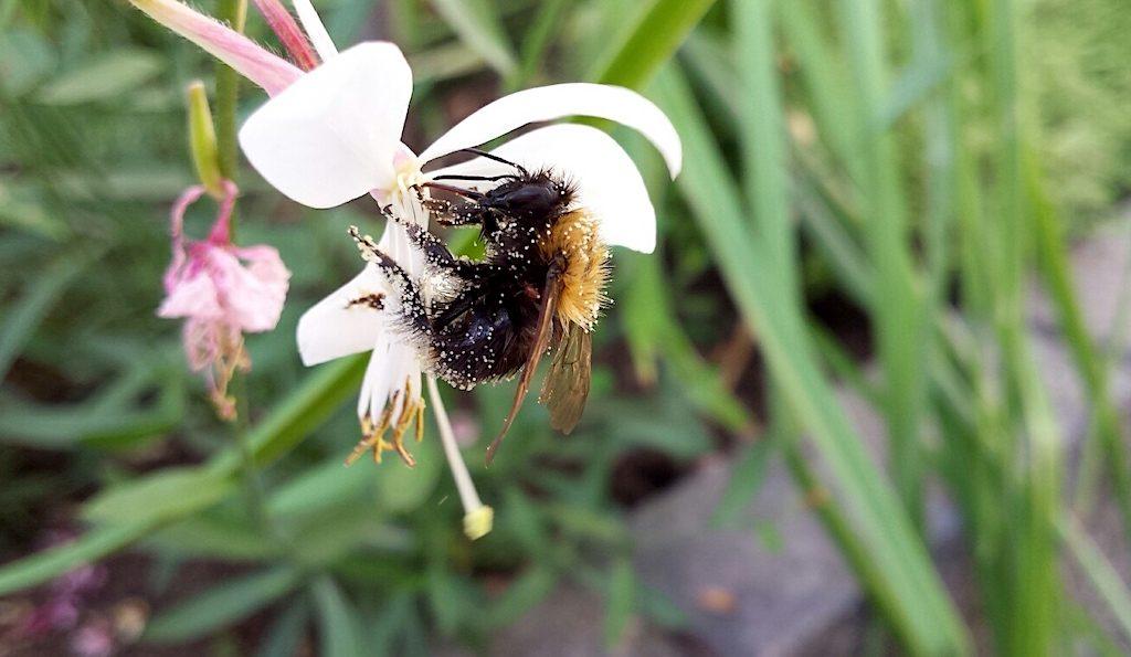 Wordt jouw tuin al veel bezocht door bijen?